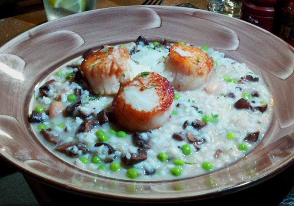 Scallops cavorting in risotto